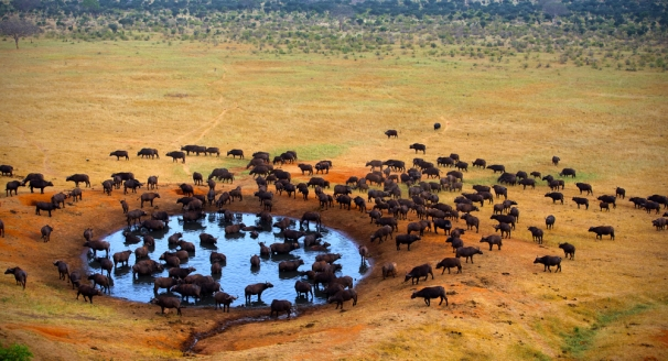 Top 10 South African Tours and Safaris