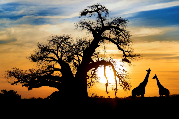 What To Expect From the Best South African Travel Deals