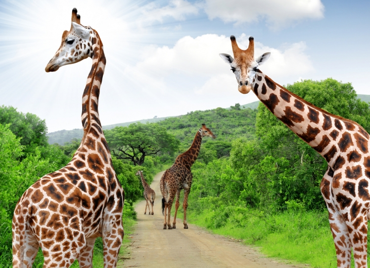 Where Can You Take Your South Africa Vacation?