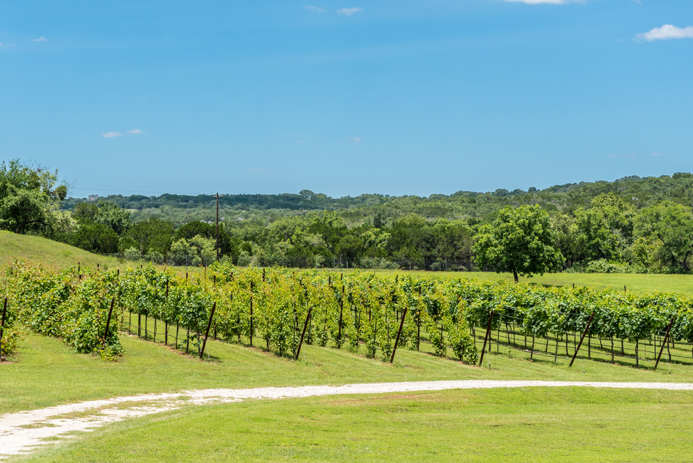 The Wine Region in the Texas Hill Country