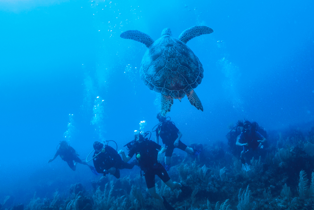 By Water Dive for Sea Turtles in the Bahamas