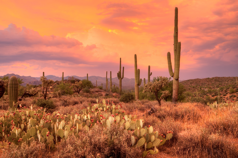 Ride an ATV Through the Sonoran Desert