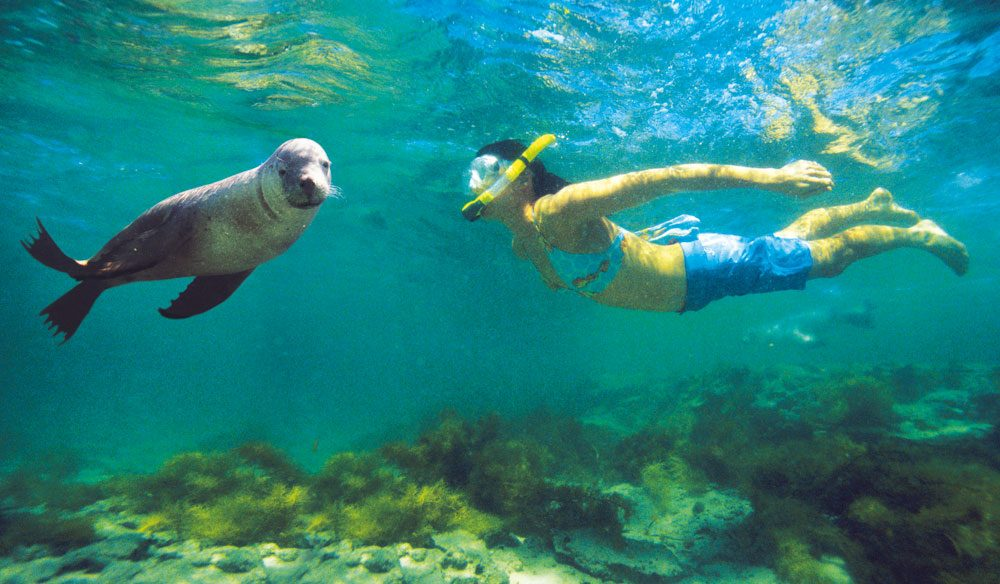 Swim with Sea Lions in Bairds Bay